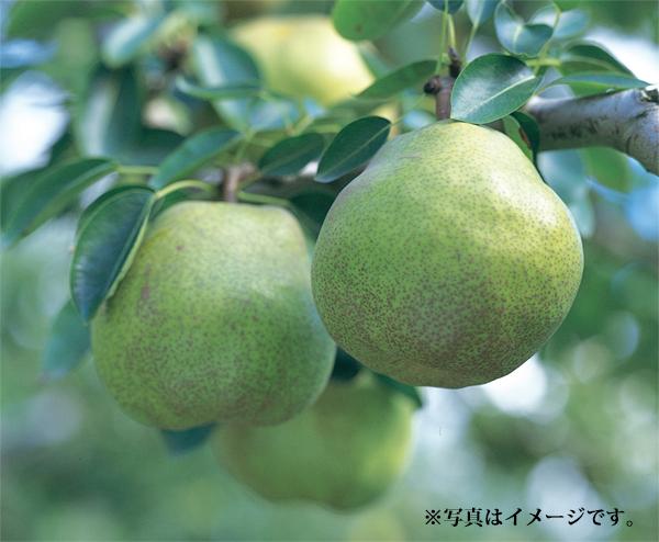 プレゼント当選者発表(10月21日締切分)